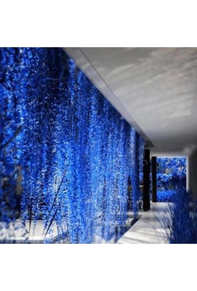 Boothas Mavi Sarmaşık Tohumu 10'lu + Dev Ortanca Tohumu 10'lu + 2 Adet Saksı + Torf + Tohum