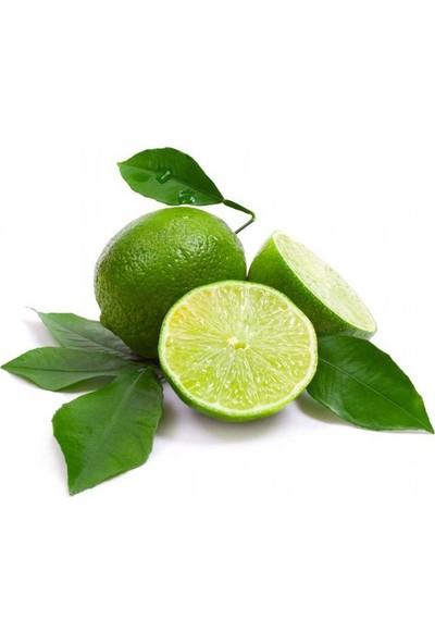 Boothas Misket Limon 10'lu Lime Limon + 2'li Saksı + Torf + Tohum