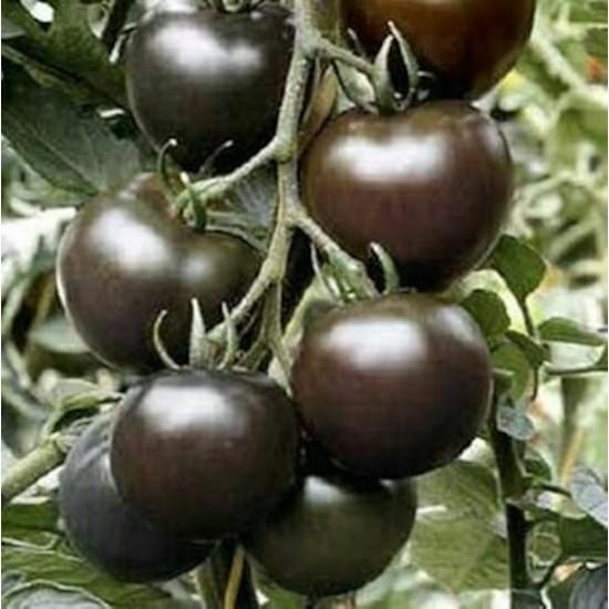 Boothas Siyah Domates Tohumu Organik Domates Tohumu 20'li + Torf + Saksı + Tohum