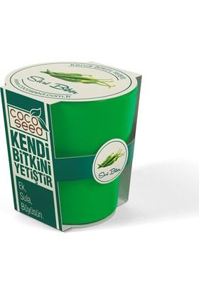 Cocoseed Bitki Yetiştirme Kiti - Sivri Biber Yeşil Bio Plastik Saksı