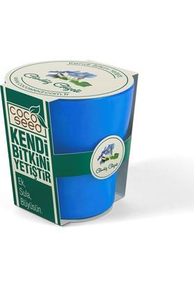 Cocoseed Bitki Yetiştirme Kiti - Gündüz GüzeliAçık Bio Plastik Saksı