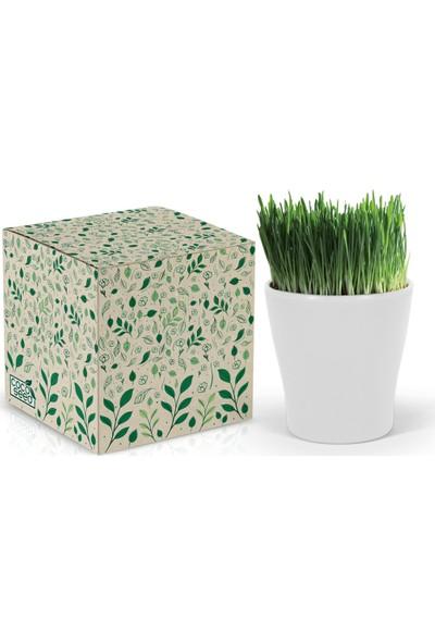 Cocoseed Bitki Yetiştirme Kiti - Kedi Çimi Beyaz Bio Plastik Saksı