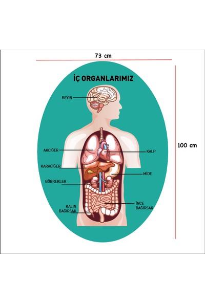 Ega Insan Iç Organları Şema Duvar Sticker