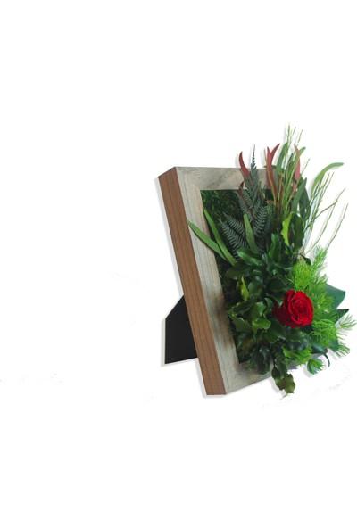Terramoss Solmayan Doğal Yosun Tablo Mini Rose