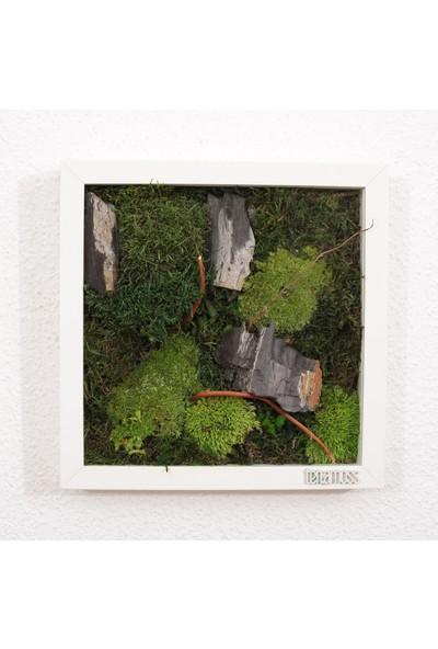 Terramoss Moss And Rock Solmayan Yosun Tablo