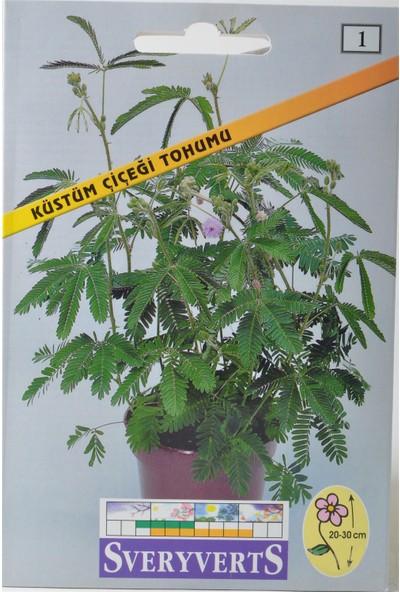 Sveryverts Küstüm Çiçeği Tohumu