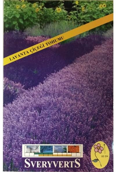 Lavanta Çiçeği Tohumu