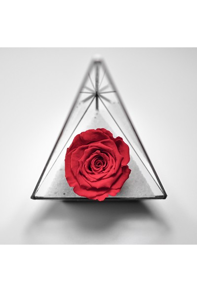 El Crea Designs Geometrik Teraryum Prizma Fanus Solaymayan Gül