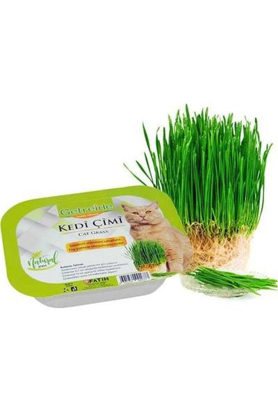 Getreide Fileli Doğal Kedi Çimi