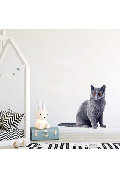 Areksan Reklam Gri Kedi Çocuk Odası Sticker