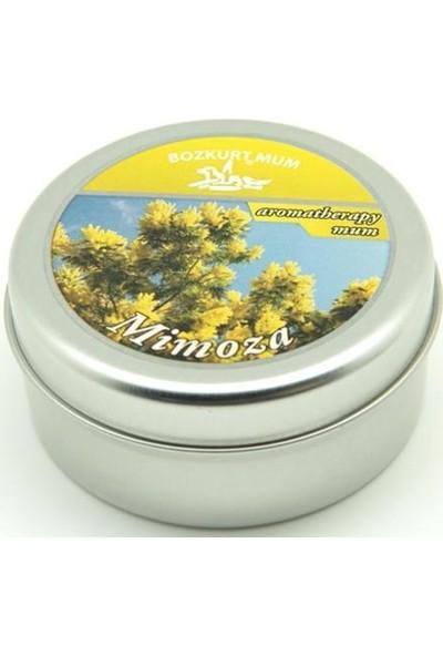 Evim Tatlı Evim Kokulu Teneke Mum Mimosa