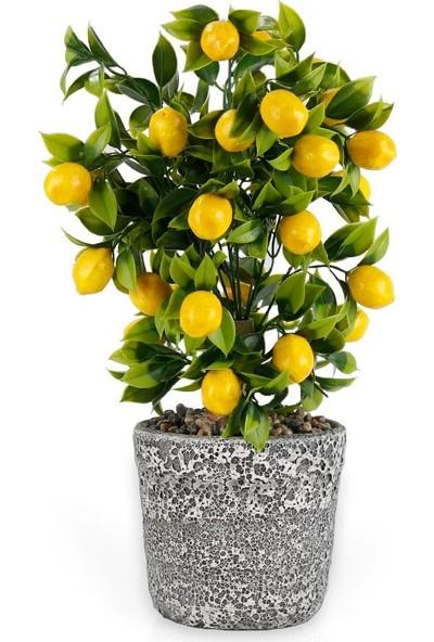 Çiçekmisin Porselen Saksıda Limon Ağacı