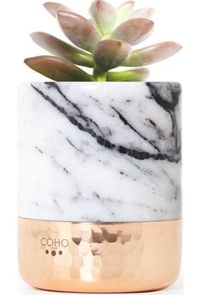 Coho Crystal Flat Bakır Tabanlı Lilac Mermer Kaktüs Saksı