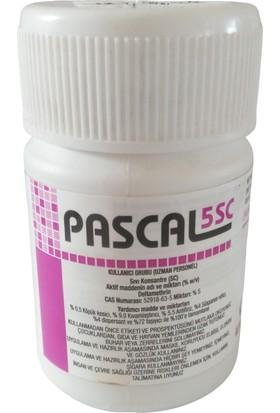 Astranova Pascal 5 Sc