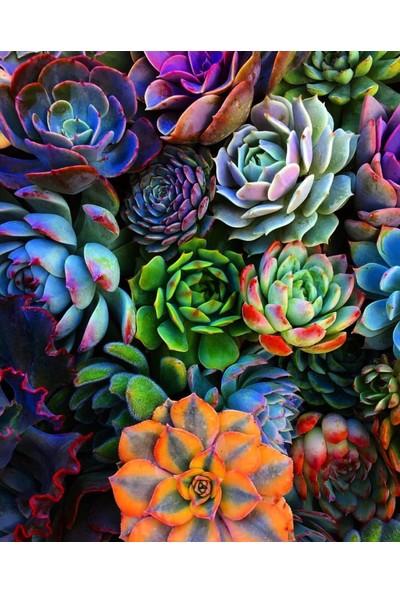 Ege Garden Sukulent Seti 10'lu 5,5 cm