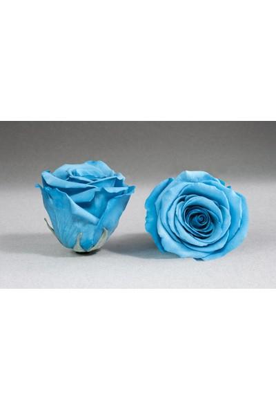 Somayan Gül Mavi Renk Xl Boy