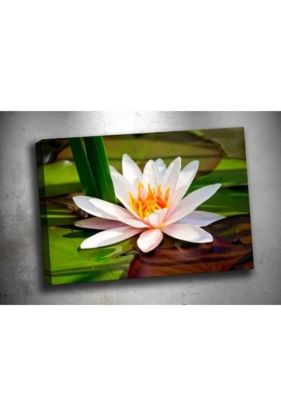 Sibiro Nilüfer Çiçeği Kanvas Tablo sz258 35 x 50 cm