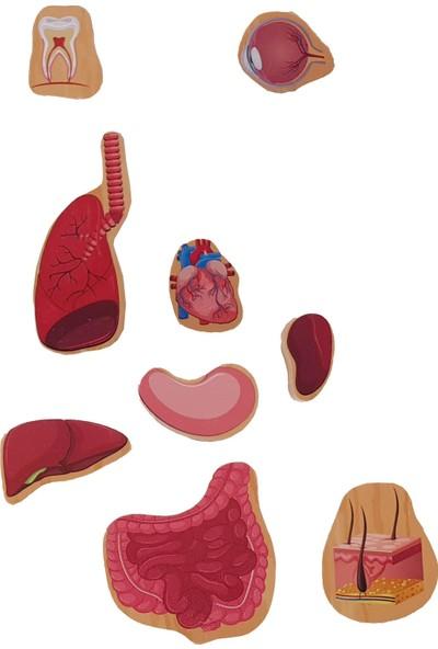 Woody Life Woodylife Ahşap Puzzle Organları Öğreniyorum Vücut Montessori Meteryali