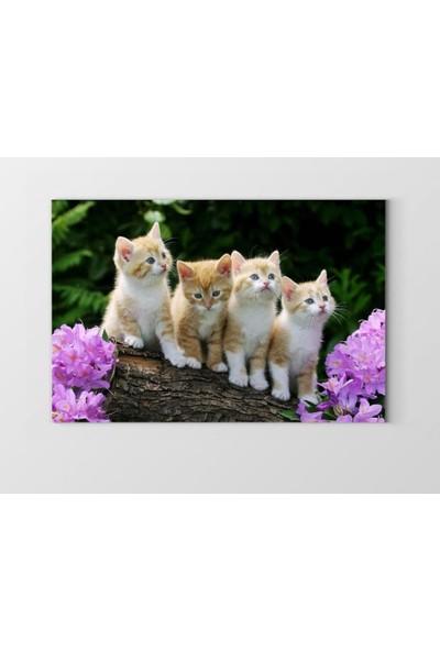 Tablo Denizi Yavru Kediler Tablosu