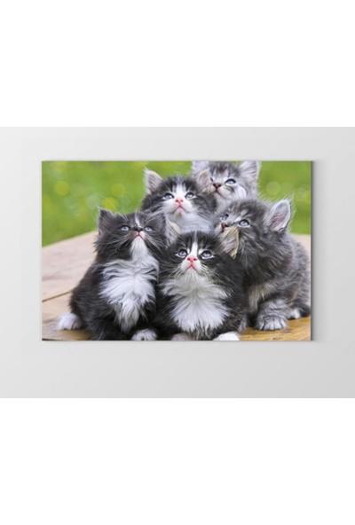Tablo Denizi Kedi Ailesi Tablosu