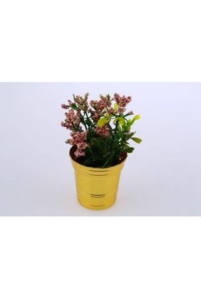 MCA Mini Vazo