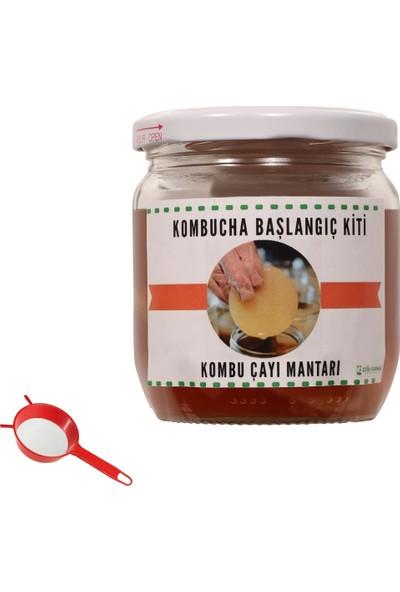 Kombucha Başlangıç Kiti- Kombu Mantarı-Kombucha Çayı - Kombucha Mantarı