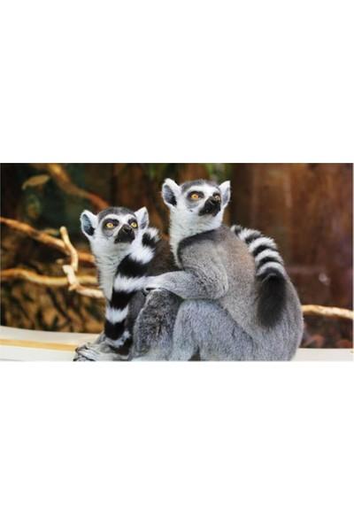 2645 İstanbul Haberim Yokmuş Gibi Çek Lemurlar EkoTablo