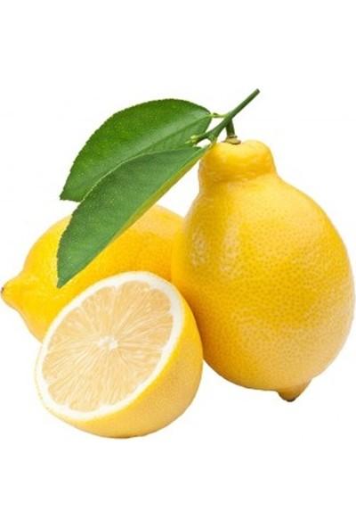 Karadeniz Fidancılık Yediveren Limon Fidanı Tüplü 120 - 150 cm