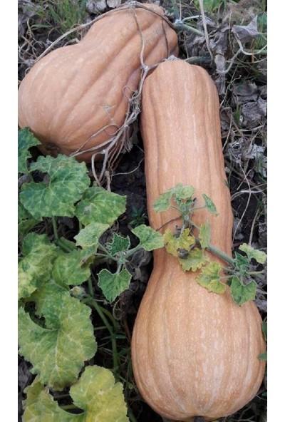 Balkabağı Tohumu Armut 10 gr