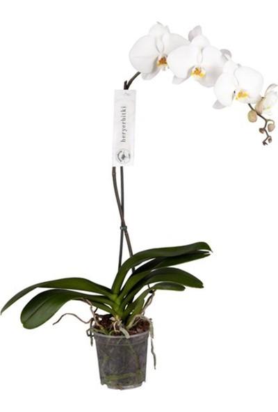 Heryer Bi̇tki̇ Tek Dallı Beyaz Orkide Iç Mekan Bitkileri Saksı Çiçekleri