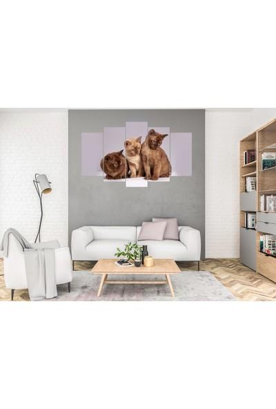 Hediye Kapında 5 Parçalı Dekoratif Tablo Kediler