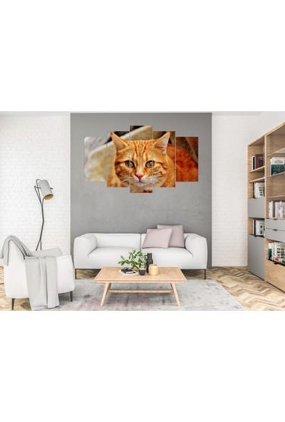 Hediye Kapında 5 Parçalı Dekoratif Tablo Kedi