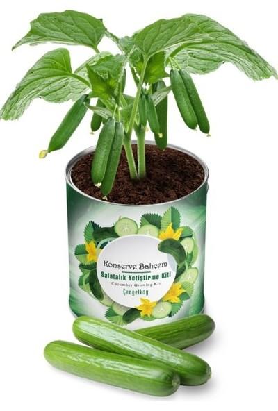 Sincap Konserve Salatalık Yetiştirme Kiti