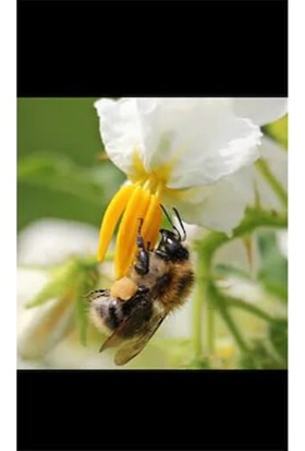 Genta Form-10 Çiçeklendirici ve Meyve Tutturucu Polen Arttırıcı Gübre 400 gr