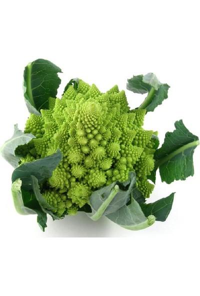 Pramit Italyan Brokoli Tohumu + Çimlendirme Torfu