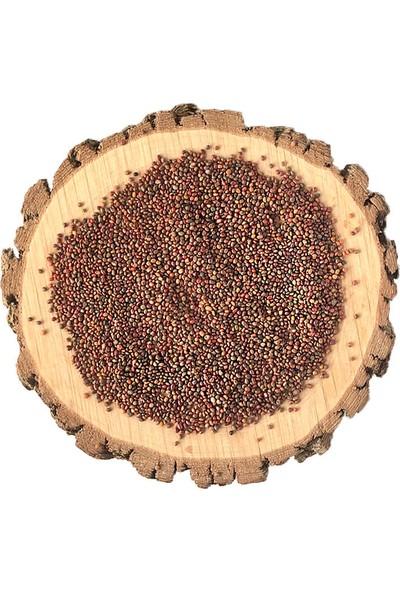Gourmeturk Roka Tohumu | 50 G