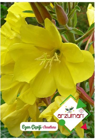 Arzuman Ezan Çiçeği Oenothera 100'lü