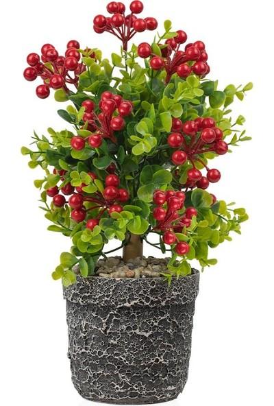 Çiçekmisin Porselen Saksıda Yapay Kokina Ağacı