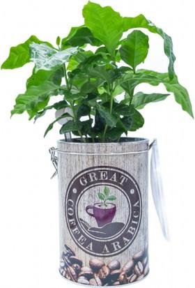 Greenmall Coffea Arabica