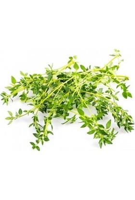 Chef's Garden Tropikal Sepet Kekik (Thyme) 25 gr