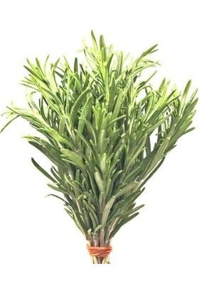 Chef's Garden Tropikal Sepet Biberiye (Rozmarin) 25 gr