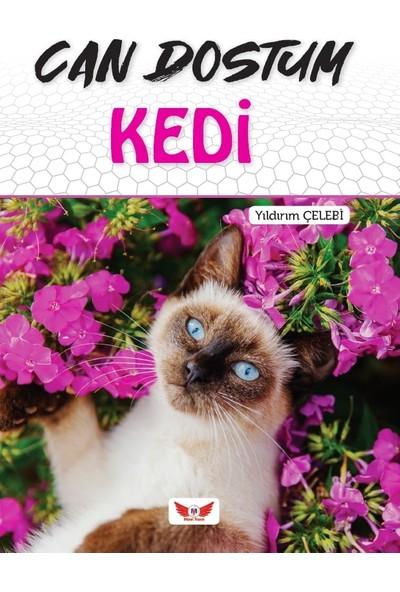 Can Dostum Kedi - Yıldırım Çelebi