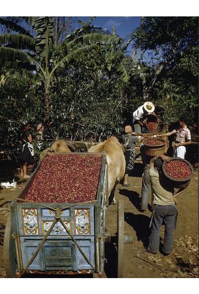 Mineiro Coffee Single Origin Kolombiya Sofia Kahve 1 kg