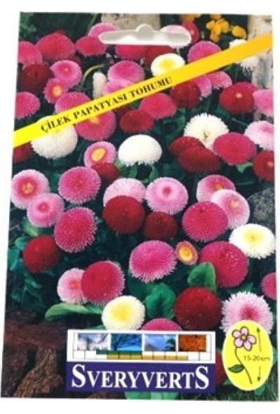 Greenmall Çilek Papatyası Çiçeği Tohumu