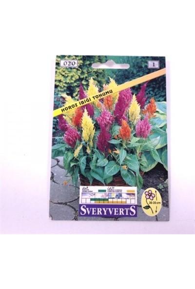 Greenmall Horoz Ibiği Çiçeği Tohumu