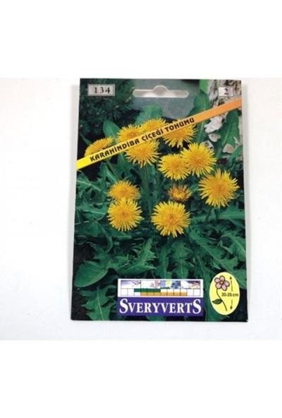 Greenmall Karahindiba Çiçeği Tohumu