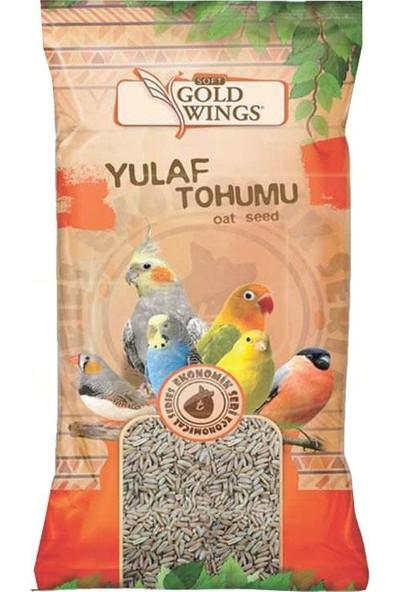 Gold Wings Yulaf Tohumu 300 gr