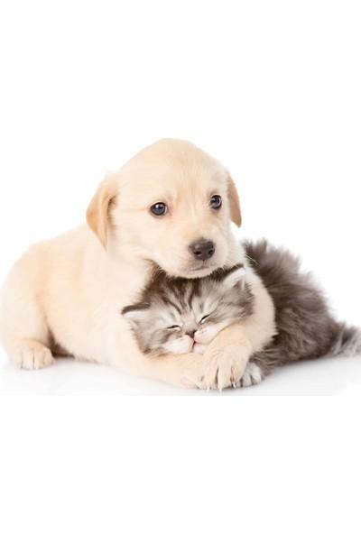 Pufai Puff Clean Extra Nem ve Yoğunluğa Sahip Doğal Köpek Temizleme Mendilleri 24 Kapsül