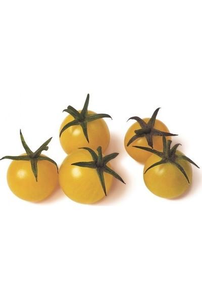 Erüst Tropikal Sepet Mini Sarı Çeri Domates 250 gr