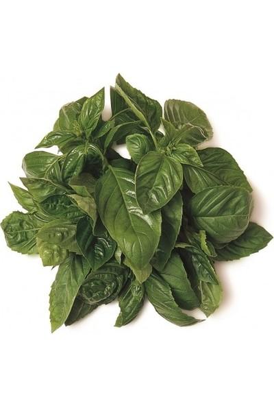 Chef's Garden Tropikal Sepet Fesleğen (Basil) 25 gr